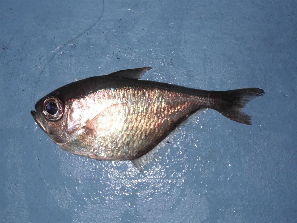 DSCF8327 1024x767 Florida, Trailer Park Boys, and Parrotfish
