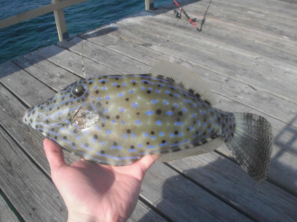 DSCF8348 1024x768 Florida, Trailer Park Boys, and Parrotfish