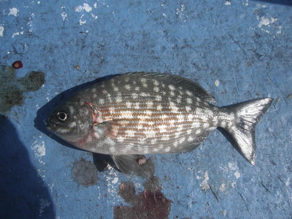 DSCF8351 1024x768 Florida, Trailer Park Boys, and Parrotfish