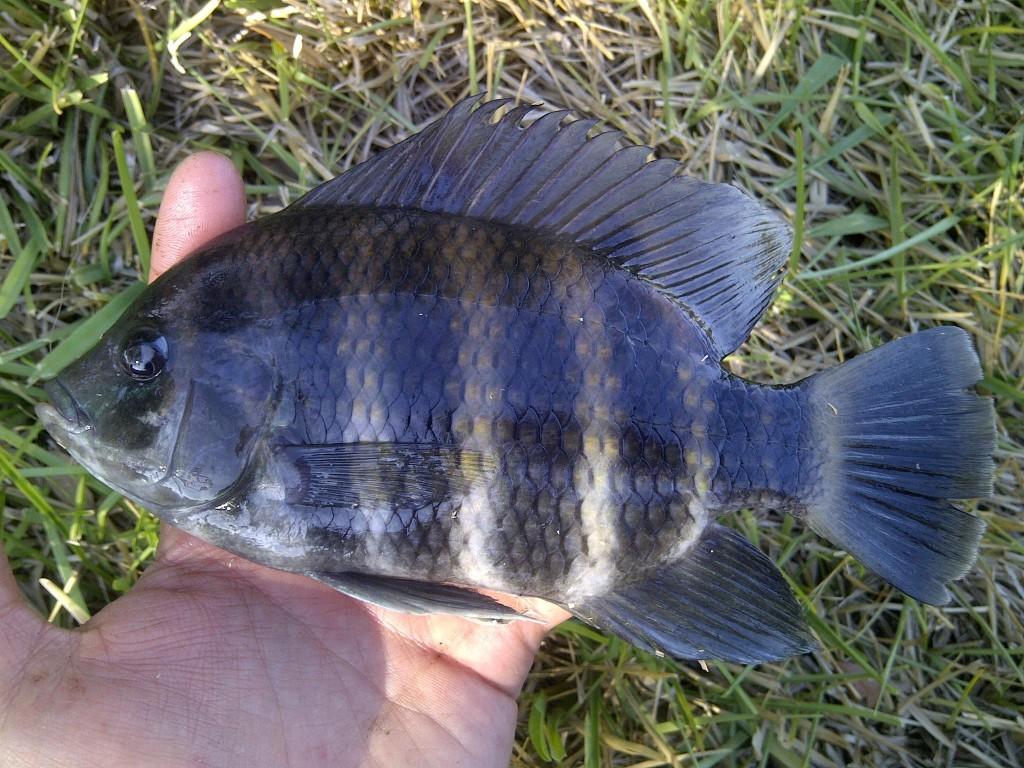 IMG 20150405 00360 1024x768 Florida, Trailer Park Boys, and Parrotfish
