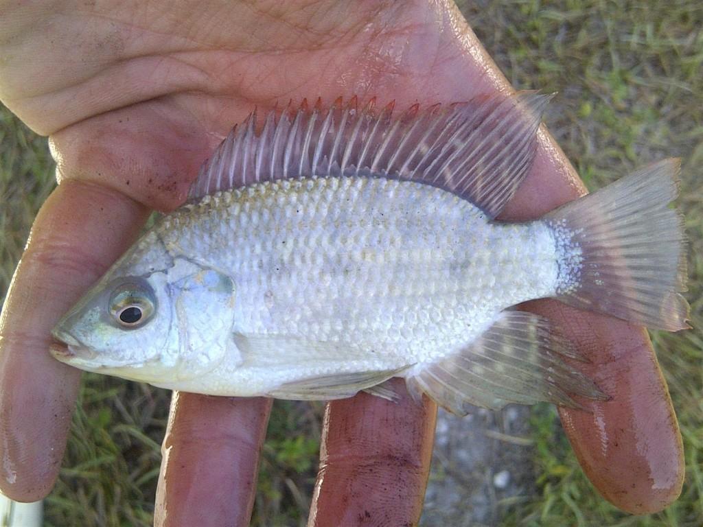 IMG 20150405 00365 1024x768 Florida, Trailer Park Boys, and Parrotfish
