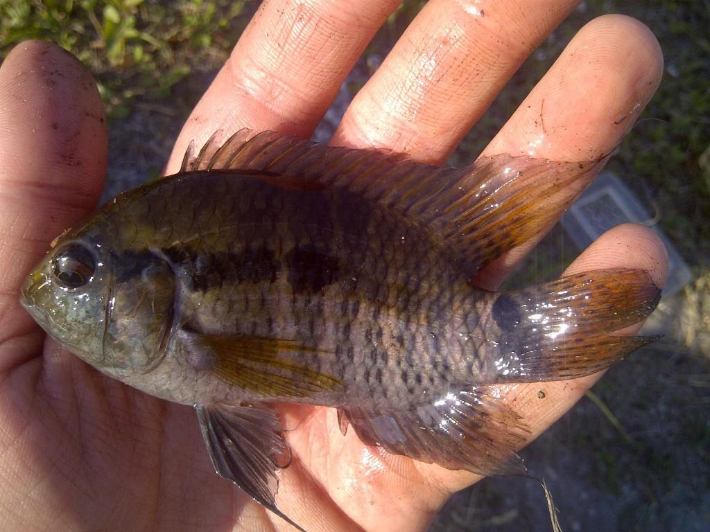 IMG 20150405 00378 1024x768 Florida, Trailer Park Boys, and Parrotfish