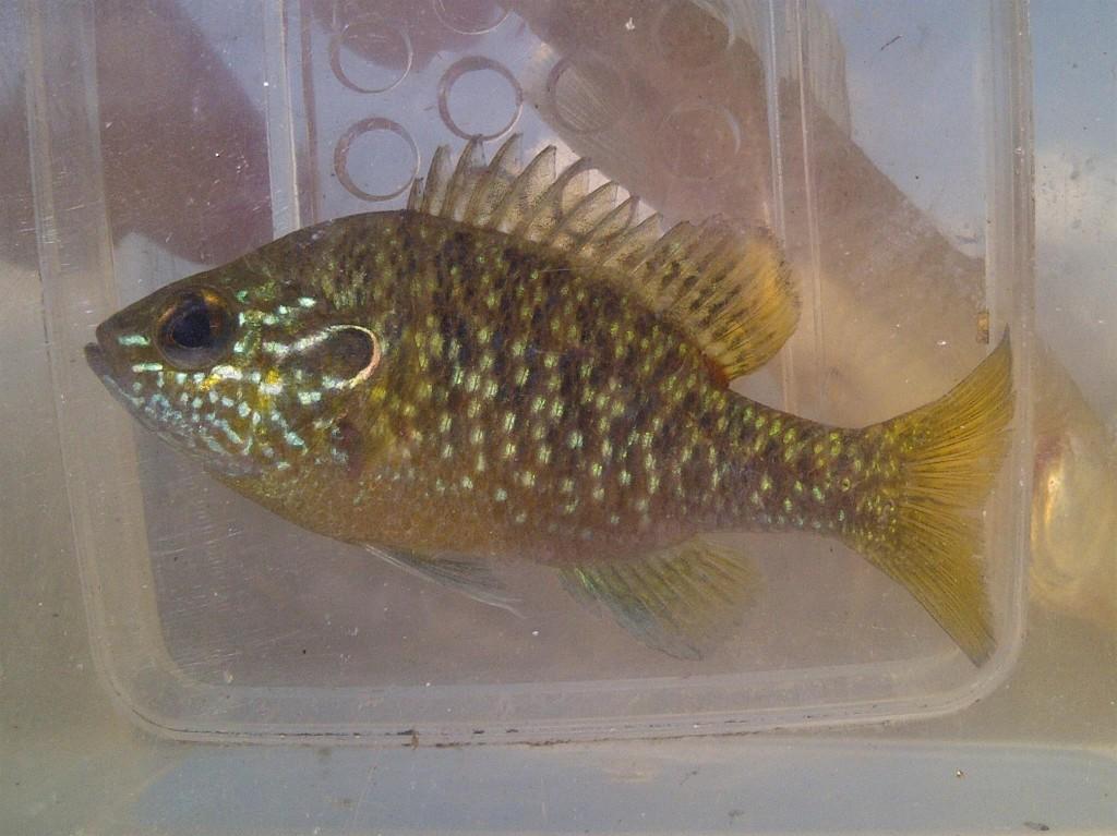 IMG 20150407 00408 1024x767 Florida, Trailer Park Boys, and Parrotfish