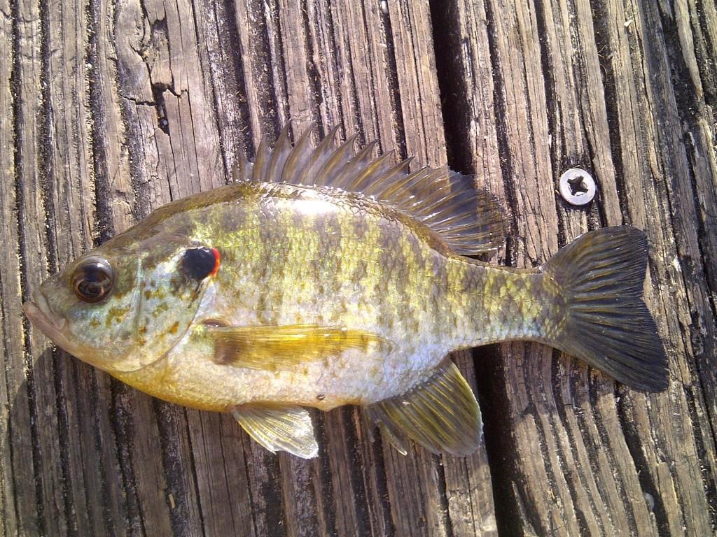 IMG 20150407 00417 1024x768 Florida, Trailer Park Boys, and Parrotfish