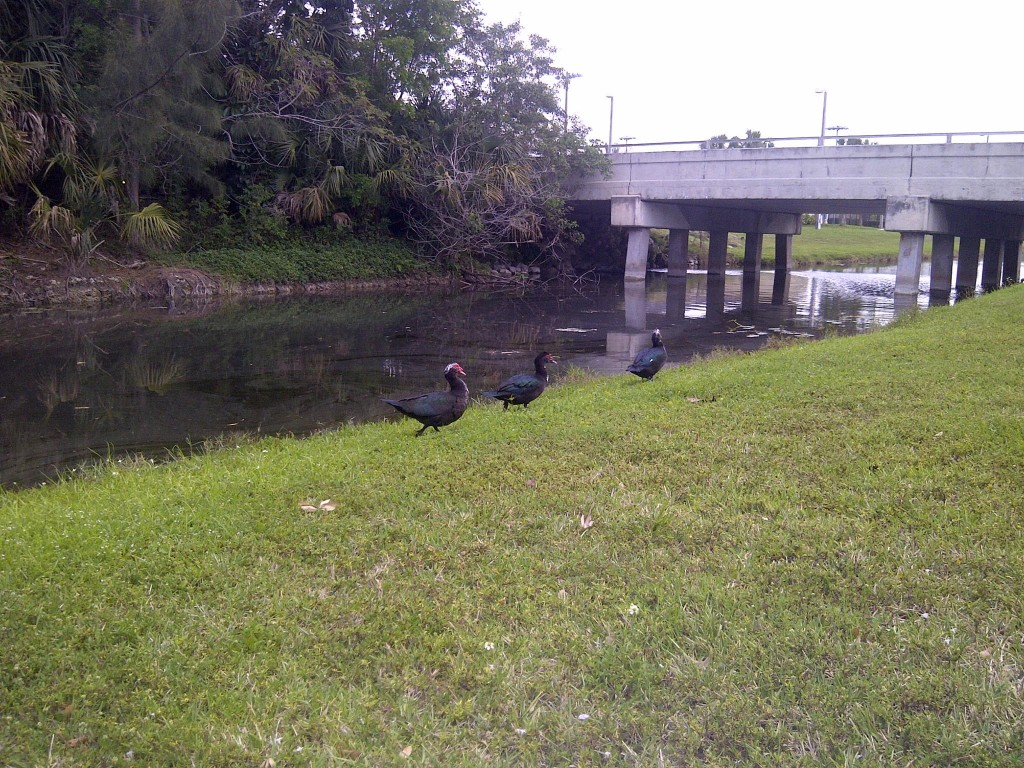 IMG 20150408 00448 1024x768 Florida, Trailer Park Boys, and Parrotfish