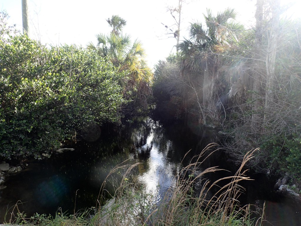 PC250945 1024x768 Bumbling through Florida