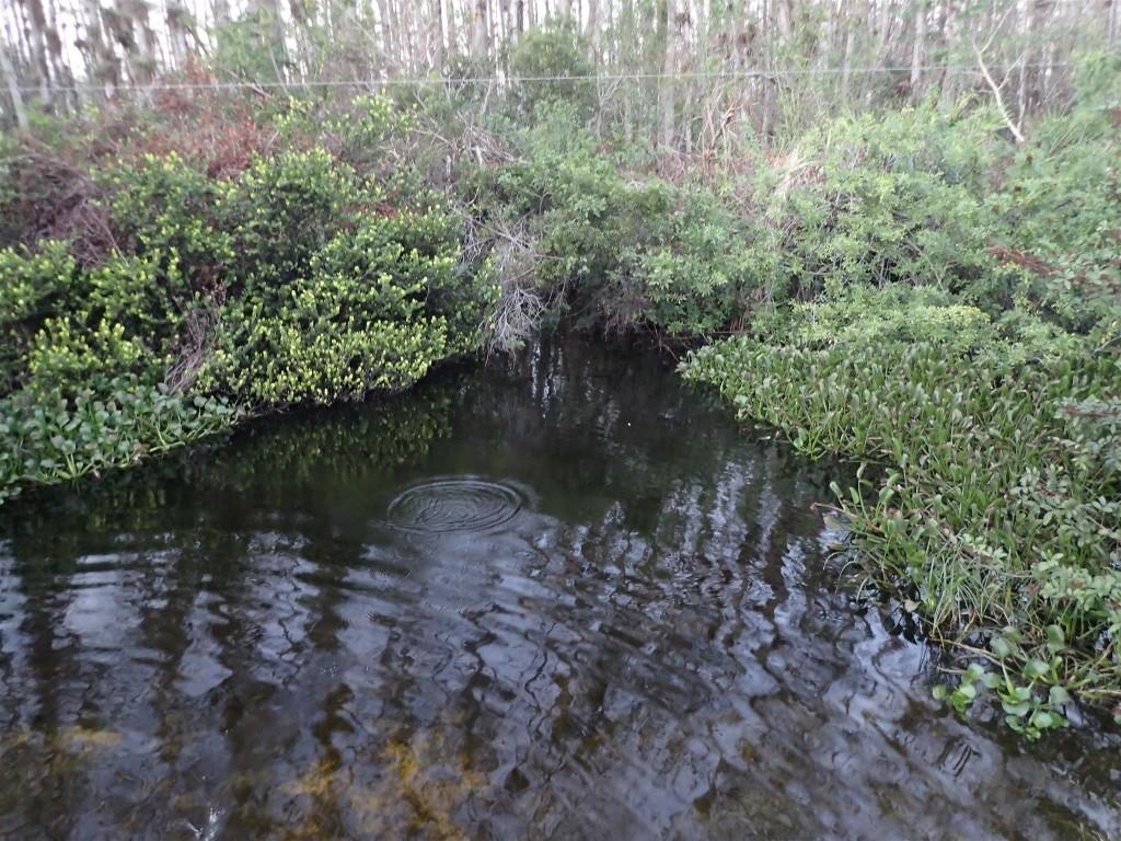 PC250986 1024x768 Bumbling through Florida