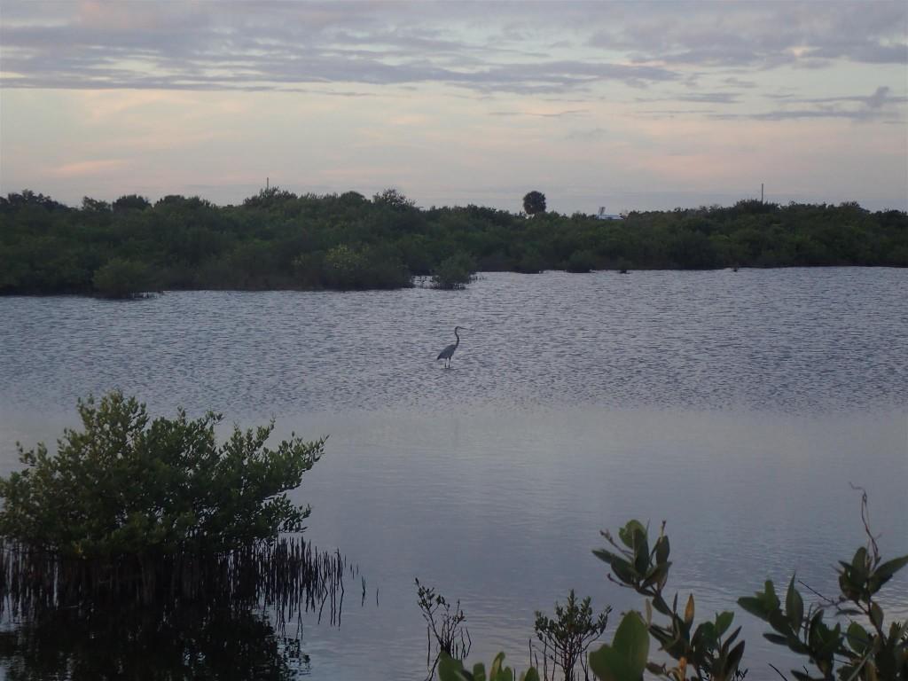 PC271108 1024x768 Bumbling through Florida