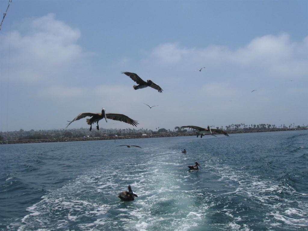 1 33 1024x768 Family trip to California